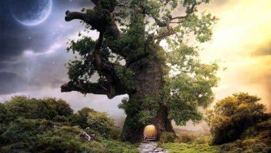 Photo of Rośliny w magii, mitach i legendach
