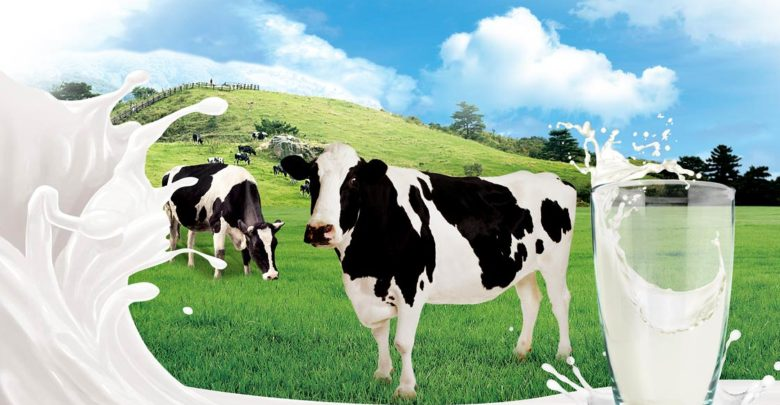 Photo of Mleko – skąd się bierze?