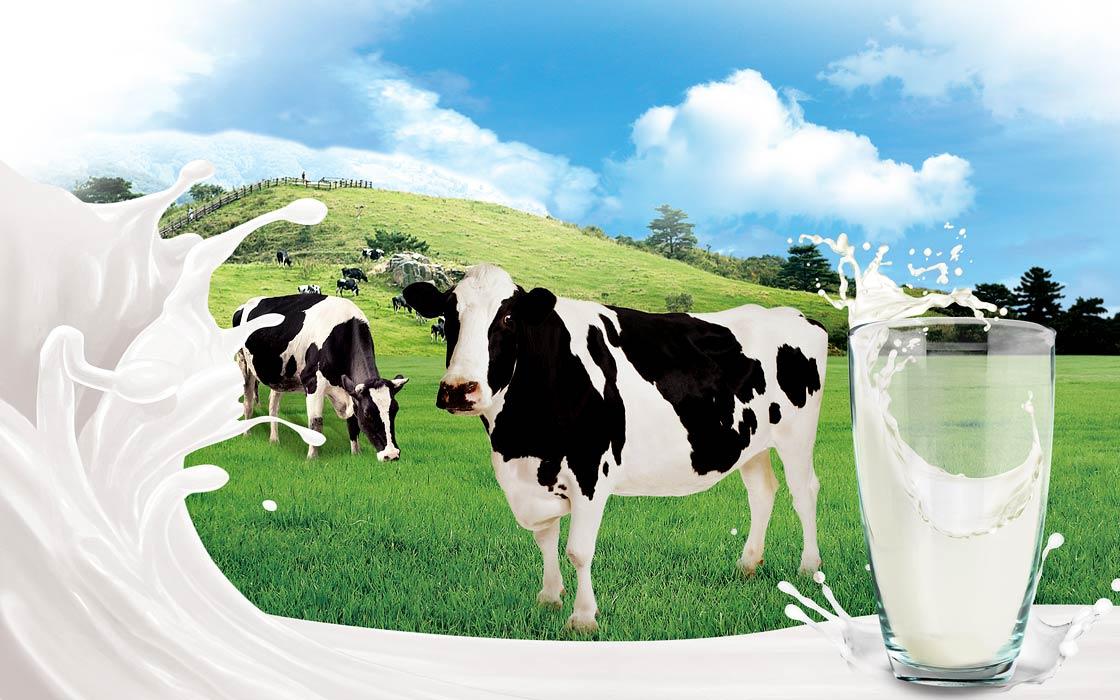 Mleko – skąd się bierze?   DinoAnimals.pl