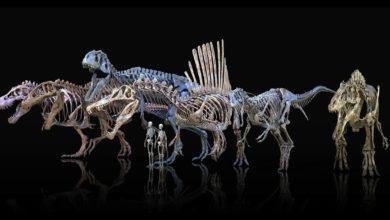 Photo of Największe teropody – największe drapieżne dinozaury