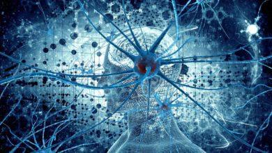 Photo of Liczba neuronów u zwierząt – TOP 10