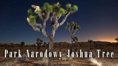 Photo of Park Narodowy Joshua Tree