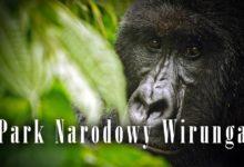 Photo of Park Narodowy Wirunga – świat Tarzana
