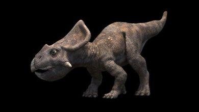 Photo of Protoceratops – niewielki ceratops