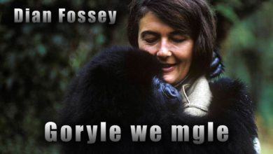 Photo of Goryle we mgle – historia Dian Fossey