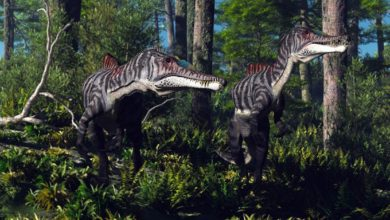 Photo of Irritator – irytujący dinozaur