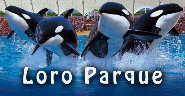 Photo of Loro Park – najlepszy ogród zoologiczny świata