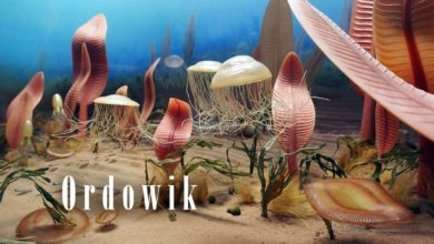 Photo of Era paleozoiczna – Ordowik