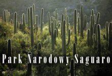 Photo of Park Narodowy Saguaro – kraina gigantycznych kaktusów