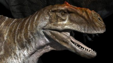 Photo of Radżazaur (Rajasaurus)