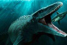 Photo of Mosasaurus hoffmanni – gigantyczny mozazaur