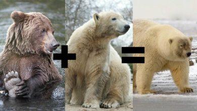 wielki kutas niedźwiedź tumblr