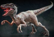 Photo of Welociraptor – jaki był naprawdę?