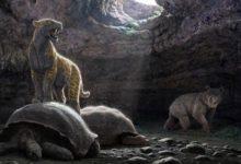 Photo of Co wiemy o wymarłych zwierzętach?