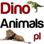 Redakcja DinoAnimals.pl