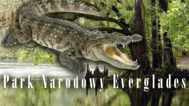 Photo of Park Narodowy Everglades