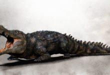 Photo of Największe krokodyle ery kenozoicznej
