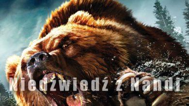 Photo of Niedźwiedź z Nandi – Nandi bear