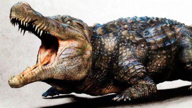 Photo of Największe krokodyle mezozoiku