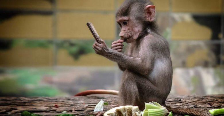 Photo of Małpy i ludzie – cywilizacja vs natura