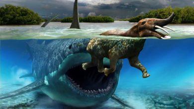 Photo of Platybelodon – słoń z Mordoru