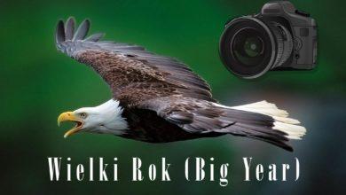 Photo of Wielki Rok (Big Year) – najlepsi ptasiarze świata