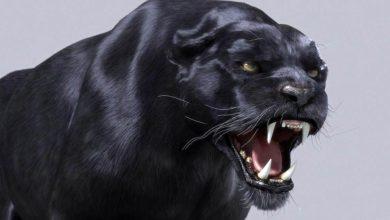 Photo of Tajemnicze brytyjskie wielkie koty