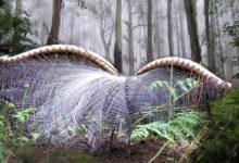 """Photo of Lirogony – przepiękne """"papugi"""" z Australii"""