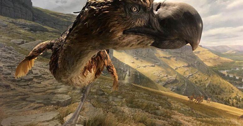 Photo of Fororak, Kelenken i Titanis – ptaki terroru