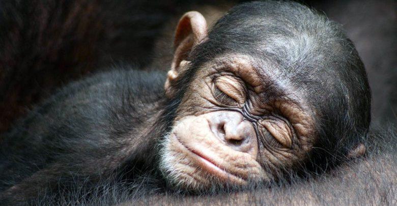 Photo of Dlaczego ludzie i zwierzęta śpią?