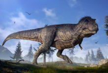 Photo of Tyranozaur – niezwykła regeneracja organizmu