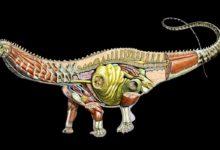 Photo of Wielkość narządów wewnętrznych dinozaurów