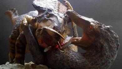 Photo of Welociraptor  (Velociraptor) vs Protoceratops