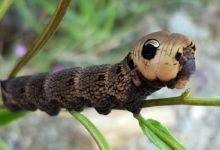 Photo of Mimikra – przystosowanie ochronne zwierząt