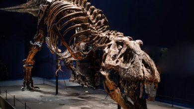 Photo of Kupię, sprzedam dinozaura