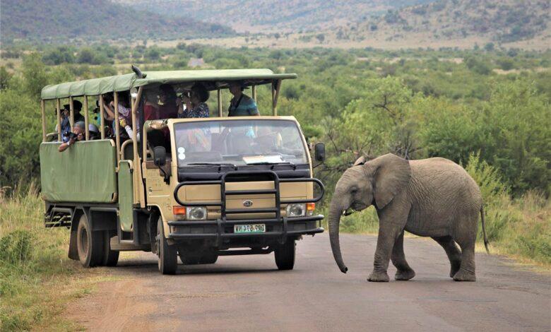 Photo of Fascynujące miejsca do obserwacji dzikich zwierząt