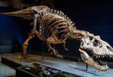 """Photo of Tyranozaur """"Stan"""" sprzedany za rekordową kwotę"""
