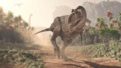 Photo of Największy ślad teropoda